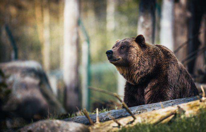 animal-animal-photography-bear-1068554